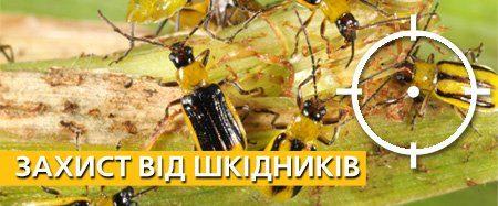 Правильный выбор инсектицидов – дело серьезное