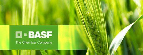 Актуальні рекомендації БАСФ щодо зернових культур