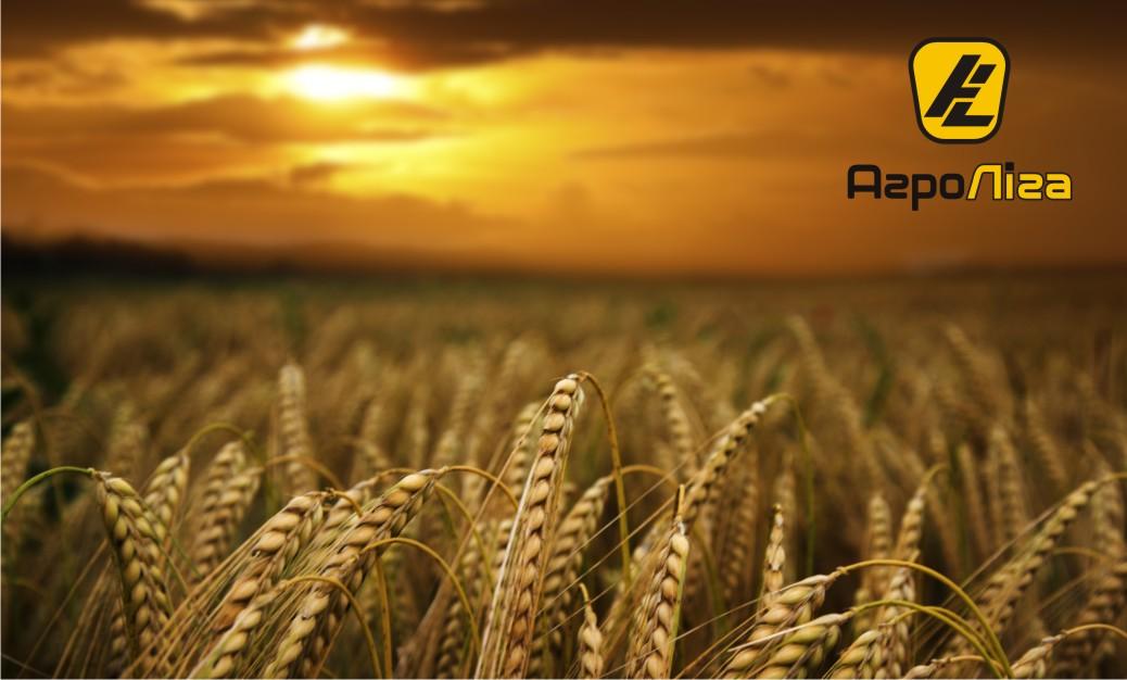 Озима пшениця – перші результати та причини високих врожаїв