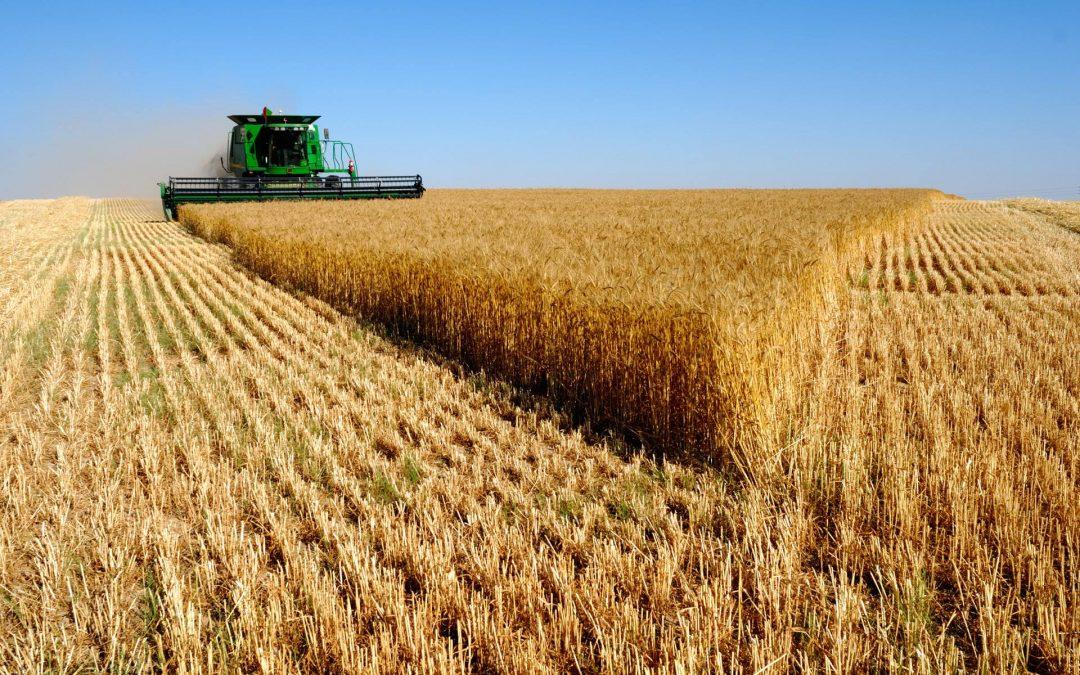 В Україні вже зібрано 85% посівів ранніх зернових
