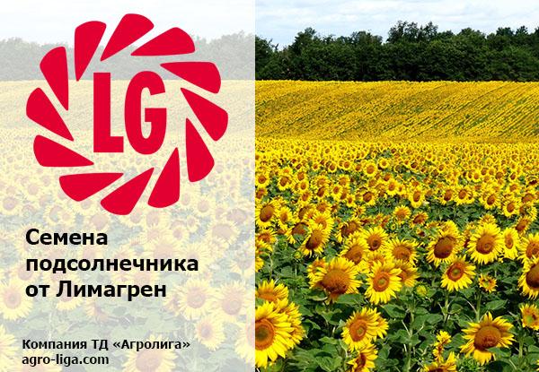 Семена подсолнечника ЛГ