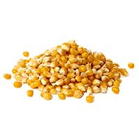 Семена кукурузы (кукуруза)