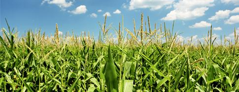 Готовимся к посевной. Кукуруза