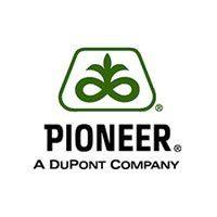 Подсолнечник Pioneer