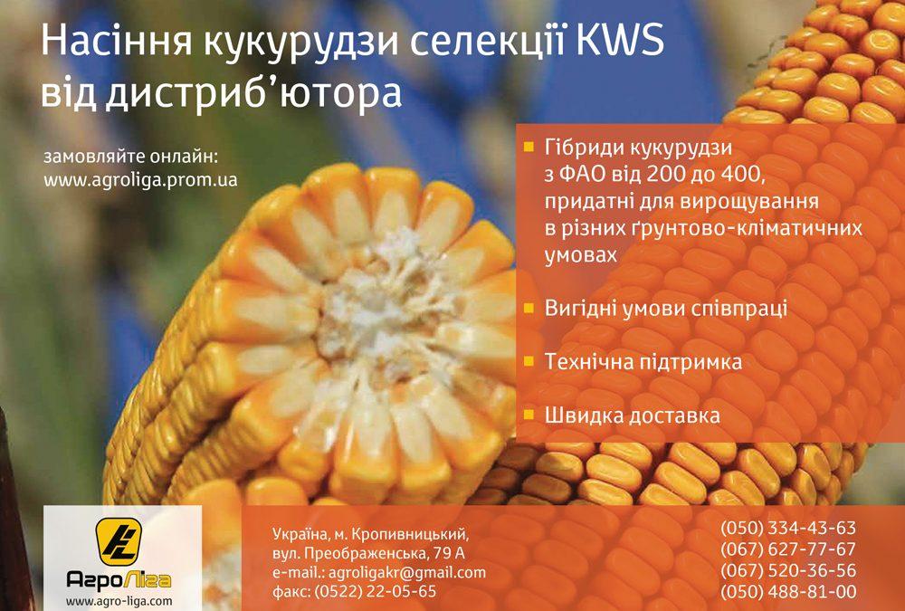 Гибриды кукурузы компании KWS от дистрибьютора