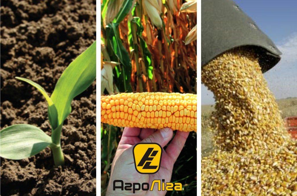 Особливості системного захисту посівів кукурудзи