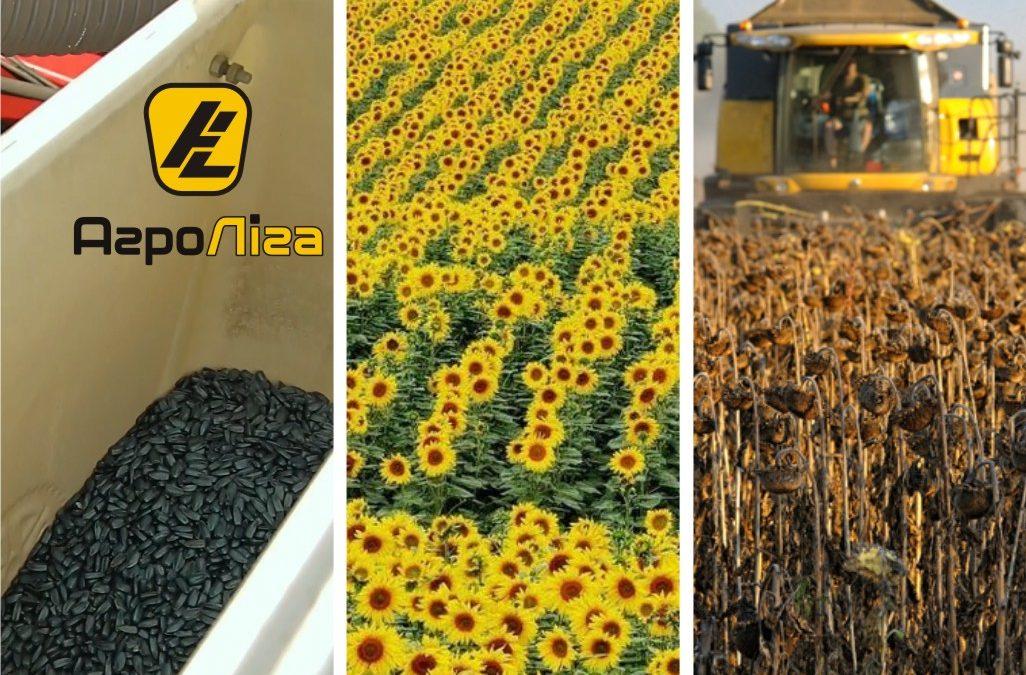 Подсолнечник: основные факторы, обеспечивающие успех выращивания