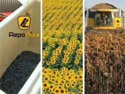 Подсолнечник основные факторы обеспечивающие успех выращивания